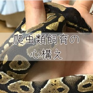 爬虫類の基本と心構え【爬虫類飼育】